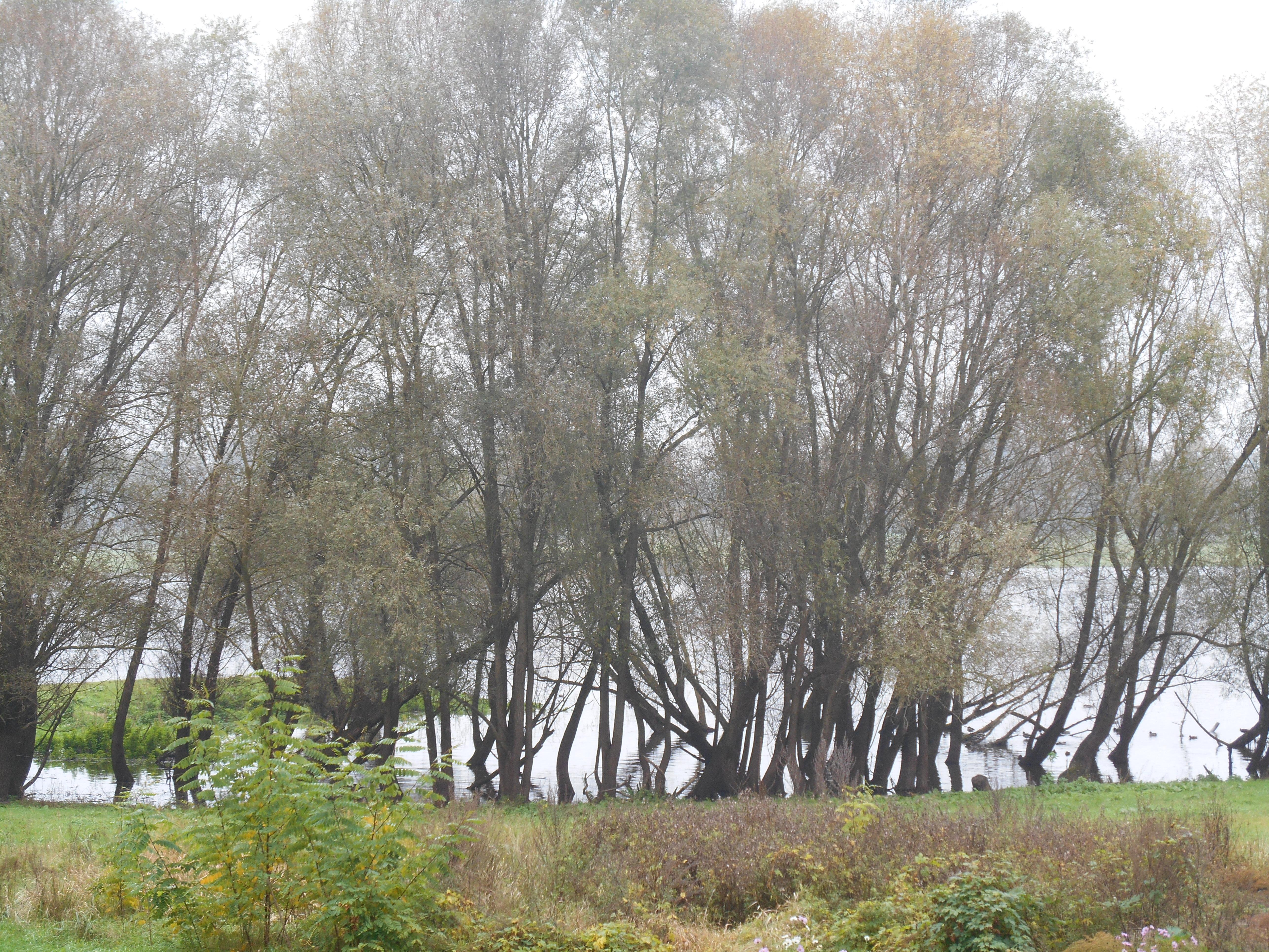 Elbe Vogelbeobachtung